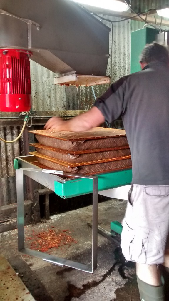The layers are built into a cheese nine layers high before going under the press