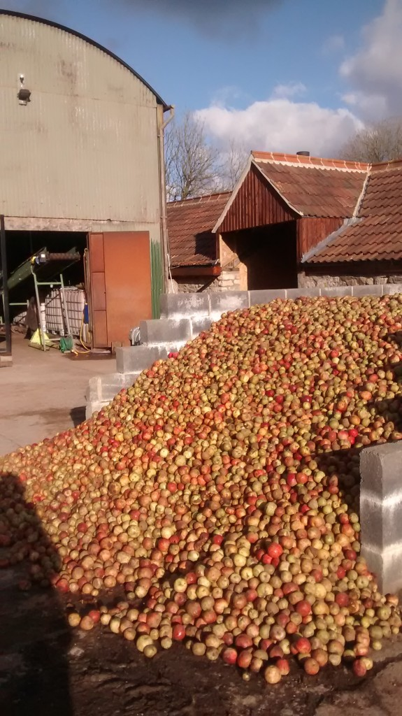 Late fruit spilling out of the silo and bursting with juice.
